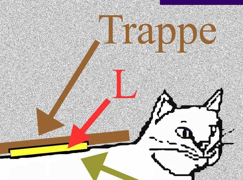 chat trappes